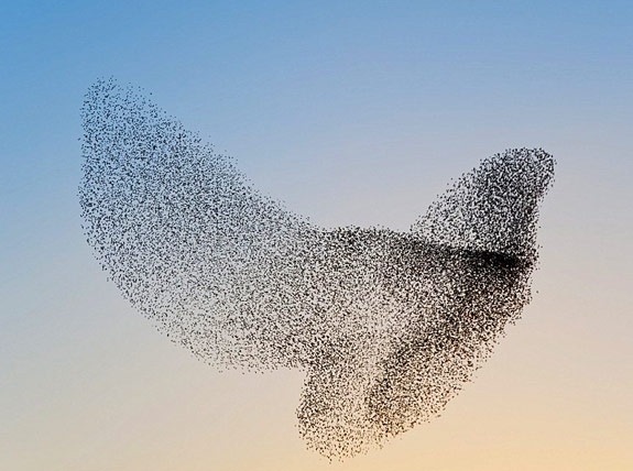 Bird Flock from: http://mudfooted.com/starling-flocks-shapes/